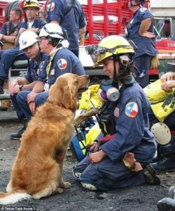 Bretagne, the last surviving 9/11 rescue dog,  with her owner Denise back in 2001 Photo Credit: Texas Task Force 1